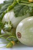 Zuccini Stock Image