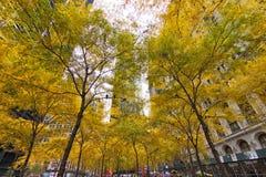 Желтый парк Zuccotti деревьев стоковая фотография