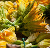 Zuchini flowers Stock Photo