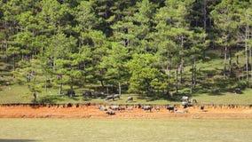 Zucht von wilden Ebern nahe Langbiang-Berg, DA-Latstadt, Lam Dong-Provinz, Vietnam stock footage