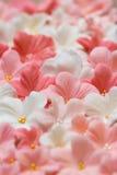Zuckerpasteblumen Stockbild