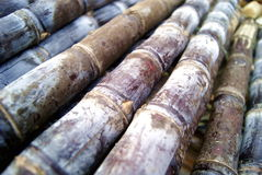 Zuckerrohr Stockbilder