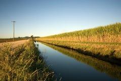 Zuckerrohr-Bauernhof Stockfotografie