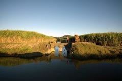 Zuckerrohr-Bauernhof und Bewässerung Stockbilder
