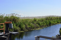 Zuckerrohr-Bewässerung Lizenzfreies Stockbild