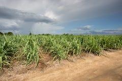 Zuckerrohrbauernhof mit blauem Himmel Lizenzfreie Stockbilder