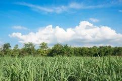Zuckerrohrbauernhof mit schönem blauem Himmel und Wolke Lizenzfreie Stockfotos