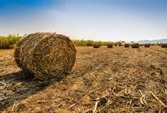 Zuckerrohrernten in Thailand Stockfotos