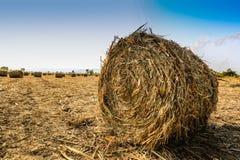 Zuckerrohrernten in Thailand Stockbilder
