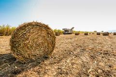 Zuckerrohrernten in Thailand Stockfoto