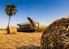 Zuckerrohrernten in Thailand Stockbild