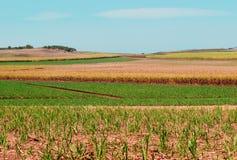 Zuckerrohrfelder für die australische Landwirtschaft Lizenzfreies Stockfoto