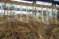Zuckerrohrserienproduktion lizenzfreies stockfoto