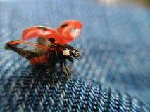 Zuckmücke vom Sommer Lizenzfreie Stockfotografie