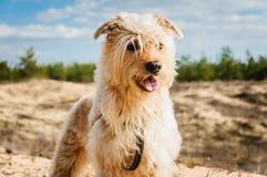 Zufrieden gestellter Hund Stockbilder