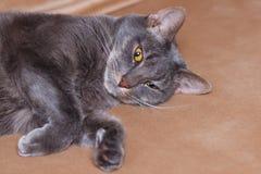 Zufrieden gestelltes Katzenschlafen stockfoto