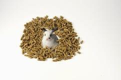 Zufuhr für Kaninchen Stockfoto