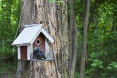 Zufuhr, Vogelhaus in einem Baum im Wald oder Park lizenzfreie stockfotografie