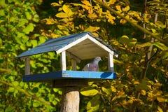Zufuhren für Vogel mit einer Taube Lizenzfreies Stockfoto