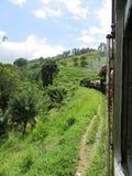 Zug in den Hochländern von Sri Lanka Stockfoto