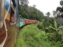 Zug im Dschungel Lizenzfreie Stockbilder