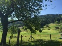 Zug-Landschaft Lizenzfreie Stockfotografie