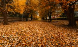Zugazarte park in autumn with leaf. On the ground royalty free stock photos