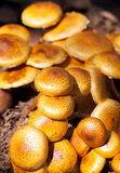 Zugitake Mushrooms Stock Photo