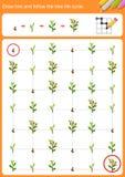 Zugseil und folgen dem BaumLebenszyklus stock abbildung