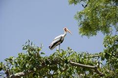 Zugvogel - 3 Lizenzfreie Stockfotografie