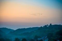 Zugvogel im schönen Sonnenunterganghimmel Stockbilder