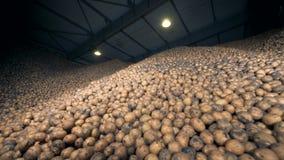Zuhause füllte Speicherkapazität mit enormer Menge Kartoffeln r stock video footage