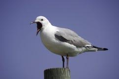 Zuidafrikaanse vogels stock foto's