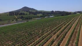 Zuidafrikaanse wijngaarden stock footage