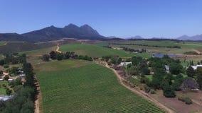 Zuidafrikaanse wijngaarden stock video