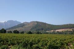 Zuidafrikaanse wijnlandbouwbedrijven Stock Afbeelding