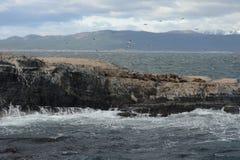 Zuidamerikaanse zeeleeuw, royalty-vrije stock foto