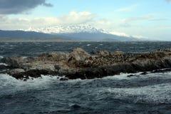 Zuidamerikaanse zeeleeuw, Otaria flavescens, het kweken kolonie en haulout op kleine eilandjes enkel buitenkant Ushuaia stock foto's