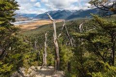 Zuidelijk Beukbos in de Pas Nationaal Park van Arthur, Nieuw Zeeland royalty-vrije stock foto's
