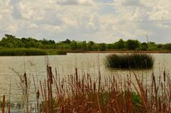 Zuidelijk Texas Lake, Rio Grande Valley stock foto