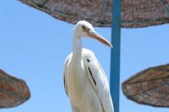 Zuidelijke zeevogel royalty-vrije stock afbeeldingen
