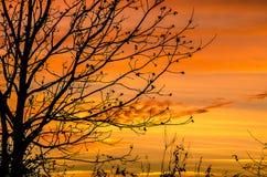 Zuidelijke Zonsondergang Stock Foto's