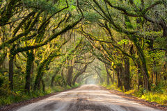 Zuiden Carolina Charleston Spring Lowcountry Dirt Road Stock Foto's