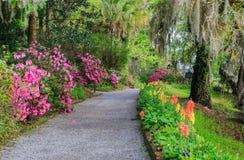 Zuiden Carolina Garden Walkway Flowers Azaleas Royalty-vrije Stock Fotografie