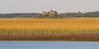 Zuiden Carolina Salt Marsh Royalty-vrije Stock Foto