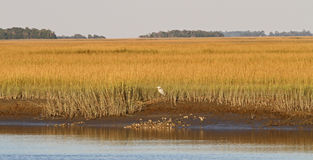 Zuiden Carolina Salt Marsh Stock Afbeelding