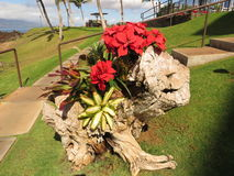 Zuiden Kihei, Kerstmis 2014 van Maui Stock Fotografie