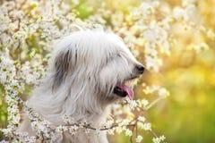 Zuiden Russische herdershond royalty-vrije stock afbeeldingen