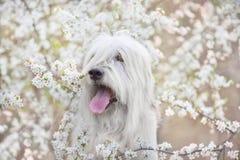 Zuiden Russische herdershond in bloemen stock afbeelding