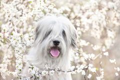 Zuiden Russische herdershond in bloemen royalty-vrije stock foto's